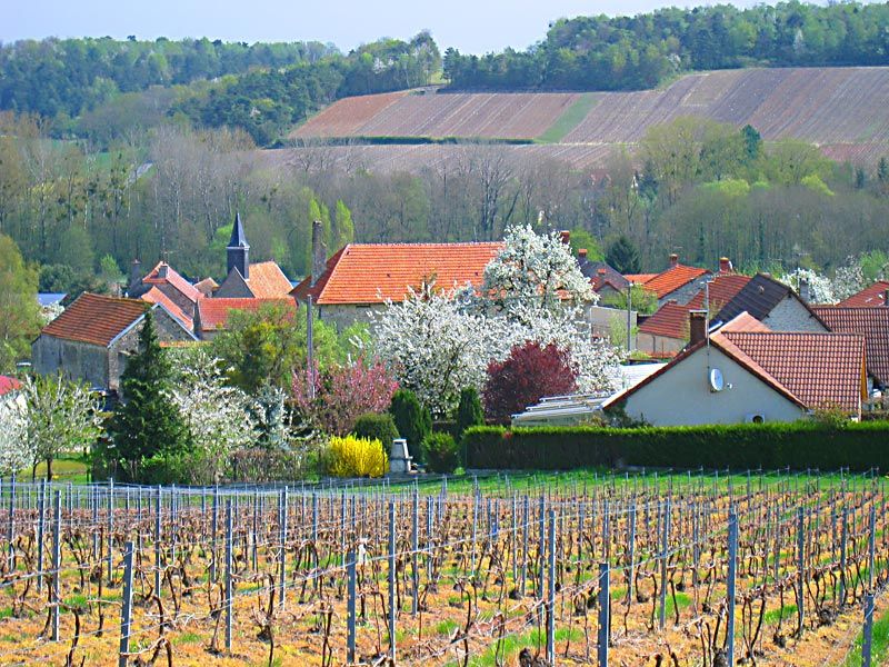 View of the village of Brouillet, a village where De La Salle's maternal grandparents lived part of the year, from one of the surrounding vineyards.
