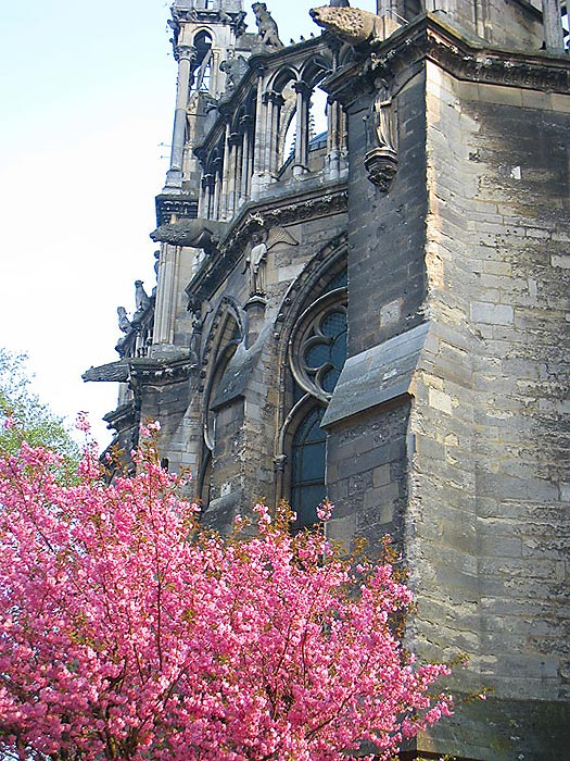 Outside view of the back of the Reims Cathedral. Note the water downspout figures.