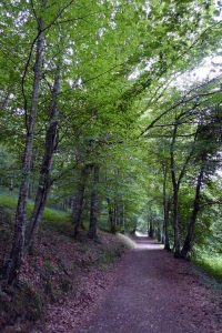 The road from the front to the back of the property at the Parmenie retreat center.
